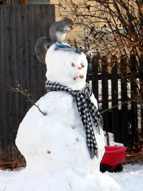 Squirrel_on_snowmans_head